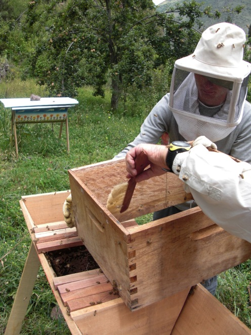 brushing remaining bees into their new home