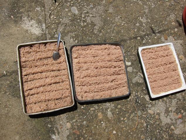 smoked salt drying in the sun