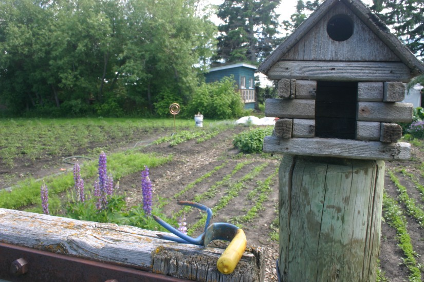 the herb garden and the coop in the distance